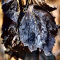 写真: 枯葉
