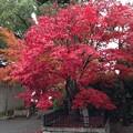 20141126 磐手杜神社の紅葉