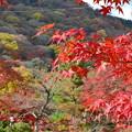 20141128 京都・嵐山付近