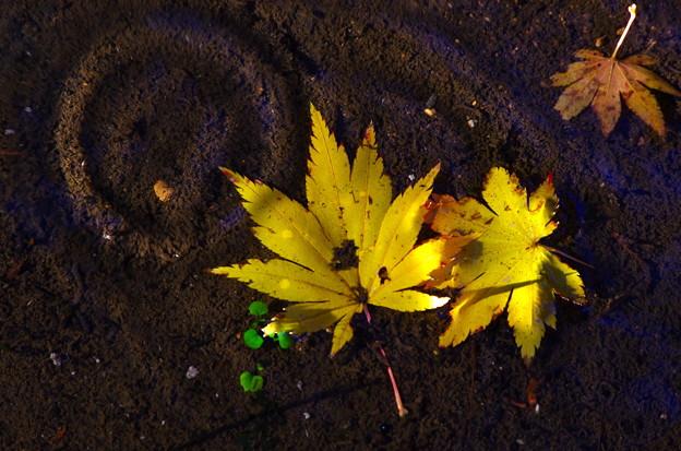 秋色さがし 21
