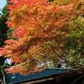 Photos: 山小屋の秋