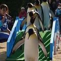 20141129 長崎ペンギン水族館13