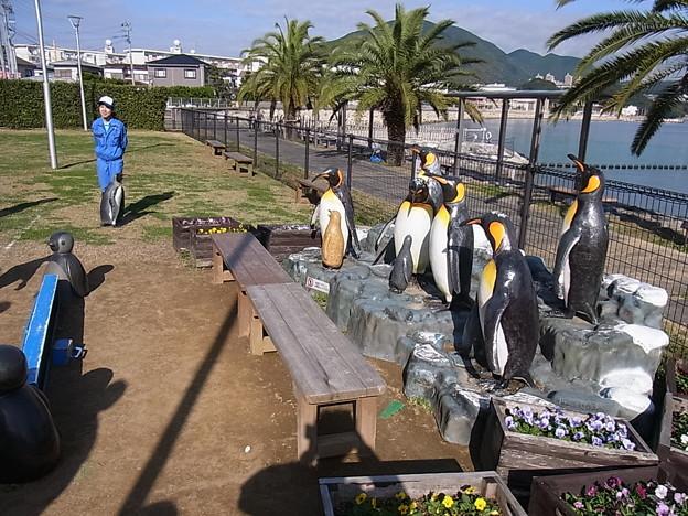 20141129 長崎ペンギン水族館22