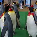 20150103 長崎ペンギン水族館 26