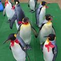 20150103 長崎ペンギン水族館 29