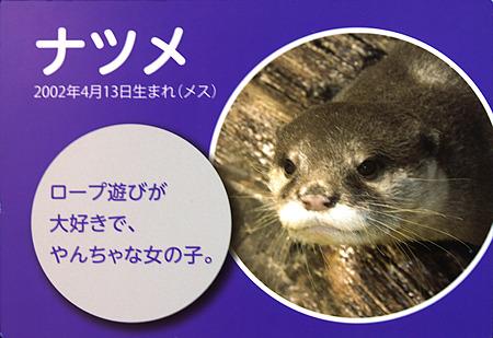 miyajima110806007