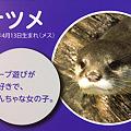 Photos: miyajima110806007