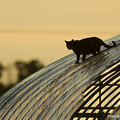 Photos: ビニールハウスと猫