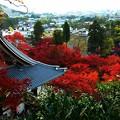 Photos: 禅林寺一望