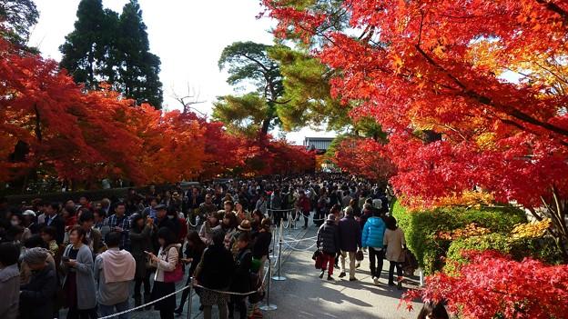 Photos: 永観堂の混雑