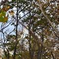 木々の隙間から虹が