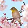 Photos: お花見^^