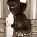 Photos: アラビアな猫