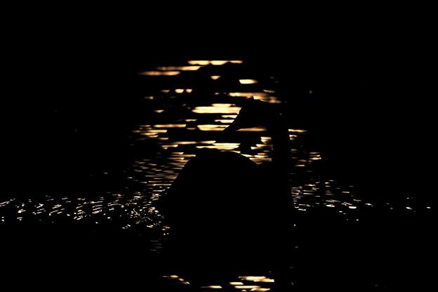 月光揺らめく
