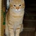 写真: 2008年10月31日のボクチン(4歳)
