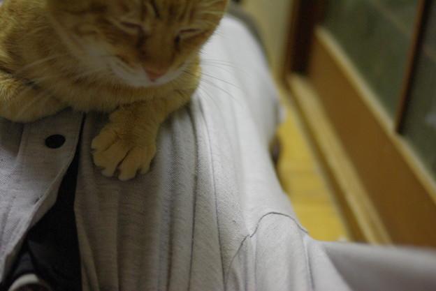 Photos: 2010年10月31日のボクチン(6歳)