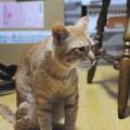 写真: 2009年11月10日の茶トラのボクちん(5歳)