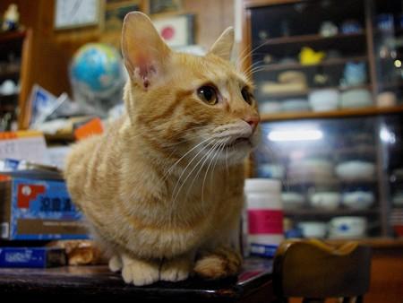 2008年11月14日の茶トラのボクちん(4歳)