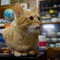 写真: 2008年11月14日の茶トラのボクちん(4歳)