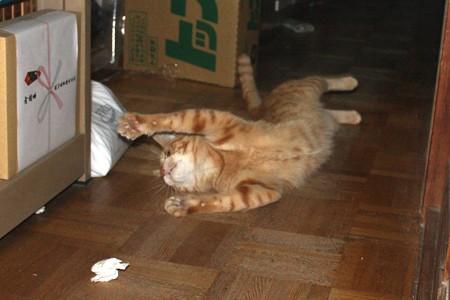 2008年11月16日の茶トラのボクチン(4歳)