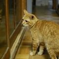 写真: 2010年11月16日のボクチン(6歳)