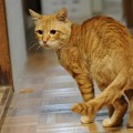 写真: 2009年11月20日のボクチン(5歳)