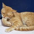 写真: 2009年11月26日の茶トラのボクちん(5歳)