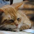 写真: 2010年12月18日の茶トラのボクちん(6歳)