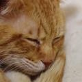写真: 2010年12月30日の茶トラのボクチン(6歳)