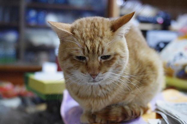 写真: 2010年01月03日の茶トラのボクちん(5歳)