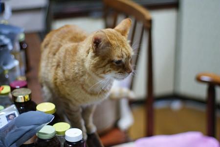 2011年02月15日の茶トラのボクチン(6歳)