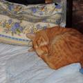 写真: 2010年03月03日の茶トラのボクチン(5歳)