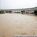 写真: 増水した紫川2