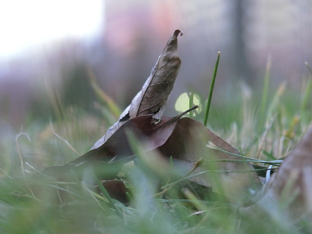 写真: 落ち葉の目線