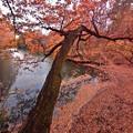 晩秋の震生湖