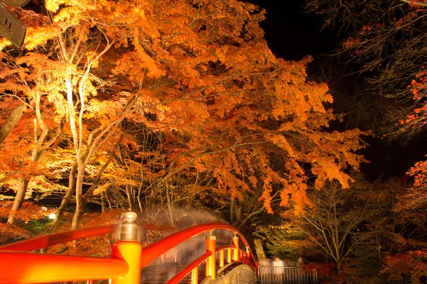 紅葉ライトアップ at 河鹿橋