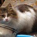 庭に佇む仔猫?
