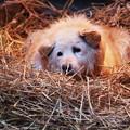 写真: ワンコの巣(2)