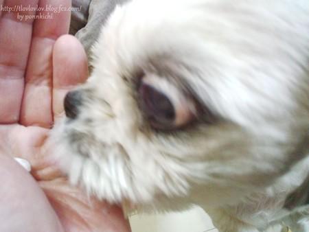 わんわん倶楽部 犬康食ワン プレミアム (3)