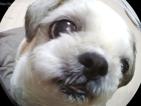 わんわん倶楽部 犬康食ワン プレミアム (5)