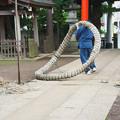 写真: 荻窪・天沼八幡神社2 2014.07.06