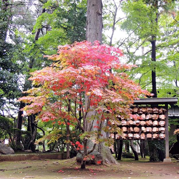 Photos: 秋の境内
