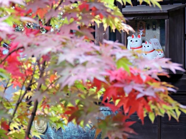 紅葉と招き猫