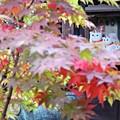 Photos: 紅葉と招き猫