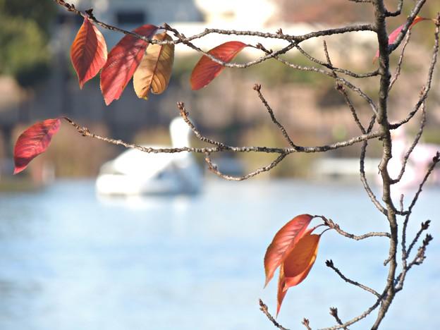 残り僅かな秋