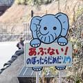 Photos: あぶない!ゾウ