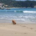 Photos: 海で