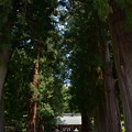 写真: 河口浅間神社・参道