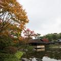 【昭和記念公園:日本庭園の清池軒】3