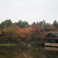 【昭和記念公園:日本庭園の清池軒】4